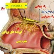 درمان نابویایی (آنومی)